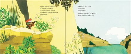 celebrate-picture-books-picture-book-review-baby-wren-and-the-great-gift-in-the-nest
