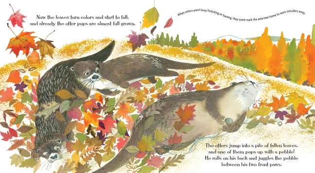 celebrate-picture-books-picture-book-review-otters-love-to-play-in-autumn