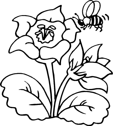 celebrate-picture-books-picture-book-review-bee-coloring-page