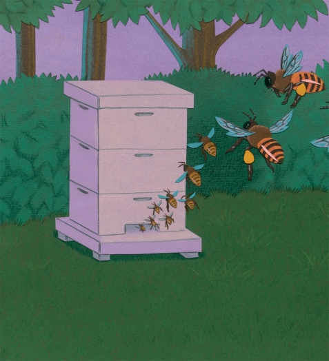 celebrate-picture-books-picture-book-review-bee-dance-interior-art-coming home