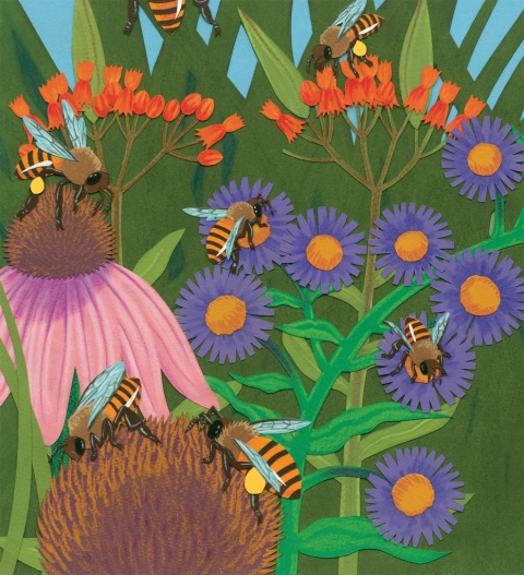 celebrate-picture-books-picture-book-review-bee-dance-interior-art-wildflowers
