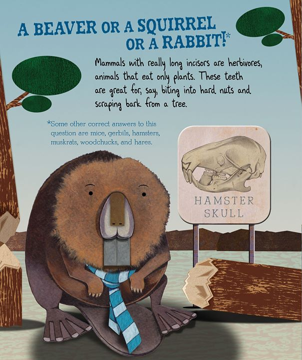 celebrate-picture-books-picture-book-review-tooth-by-tooth-beaver