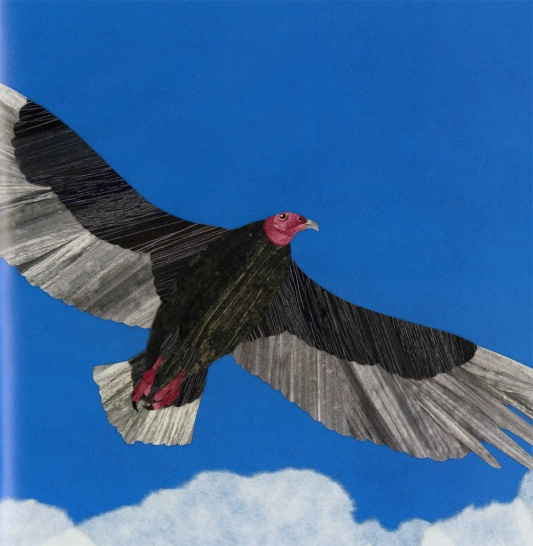 celebrate-picture-books-picture-book-review-vulture-view-soaring-vulture