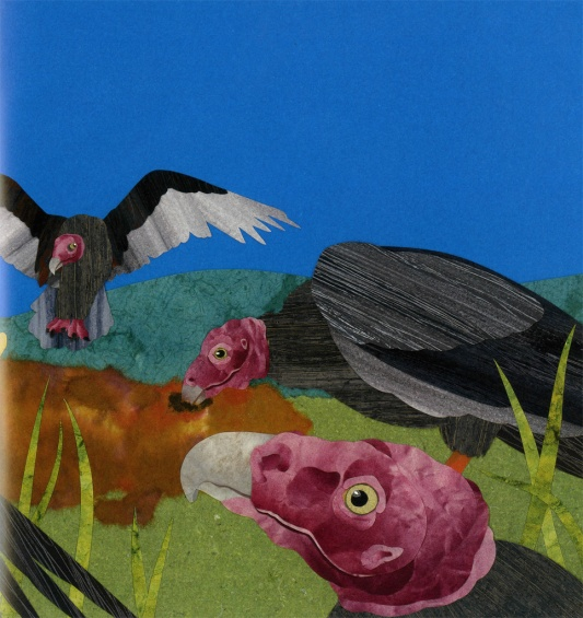 celebrate-picture-books-picture-book-review-vulture-view-vultures-eating