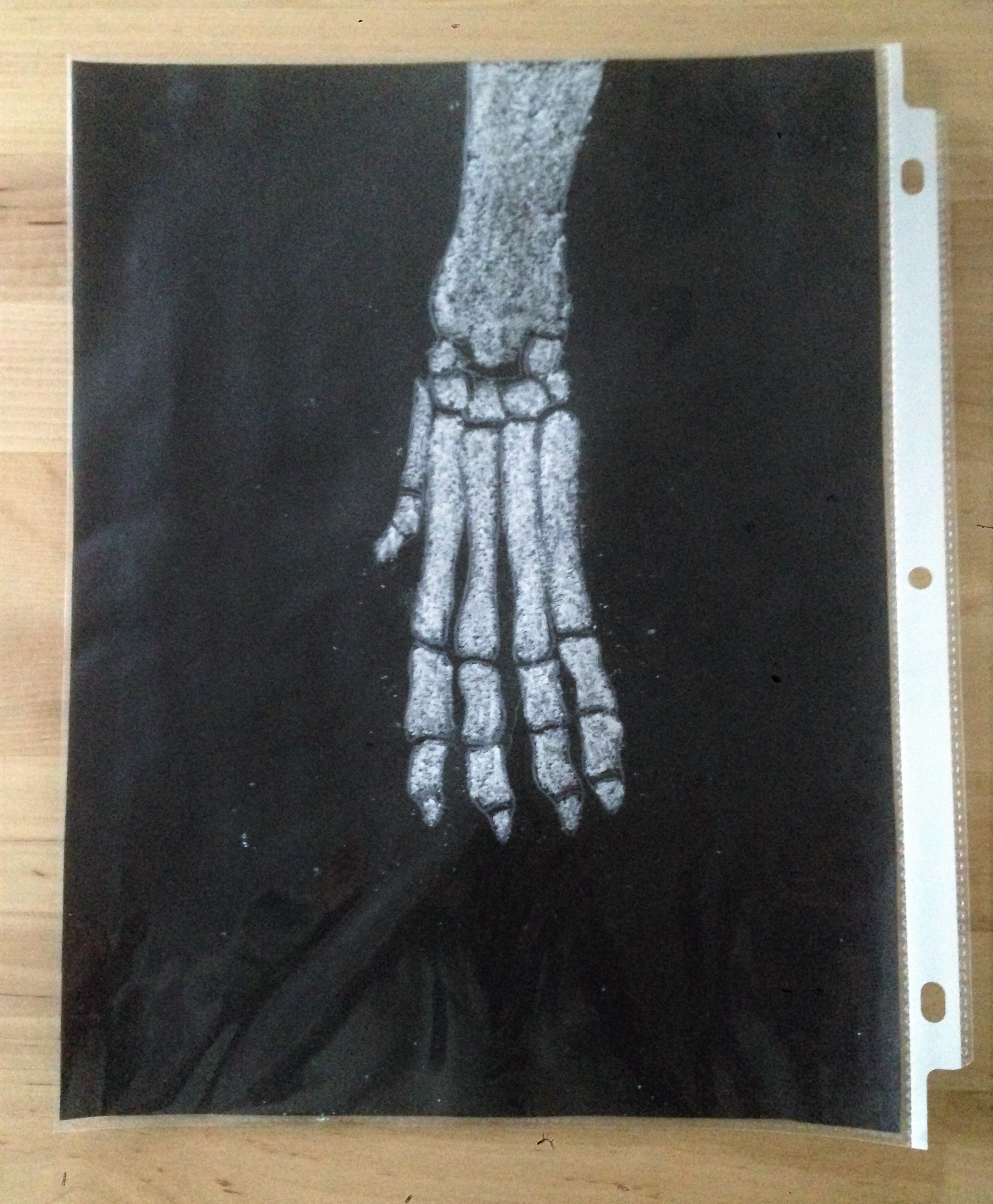 celebrate-picture-books-picture-book-review-x-ray-craft-dog-paw