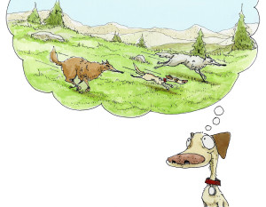 celebrate-picture-books-picture-book-review-wolf-camp-running-with-wolves
