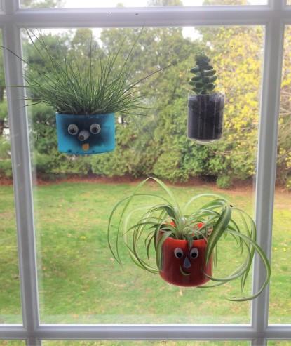 celebrate-picture-books-picure-book-review-window-terrarium-1