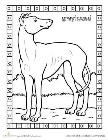 A Greyhound A Groundhog