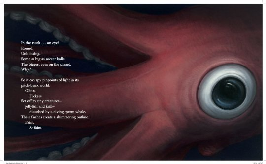 celebrate-picture-books-picture-book-review-giant-squid-big-eye