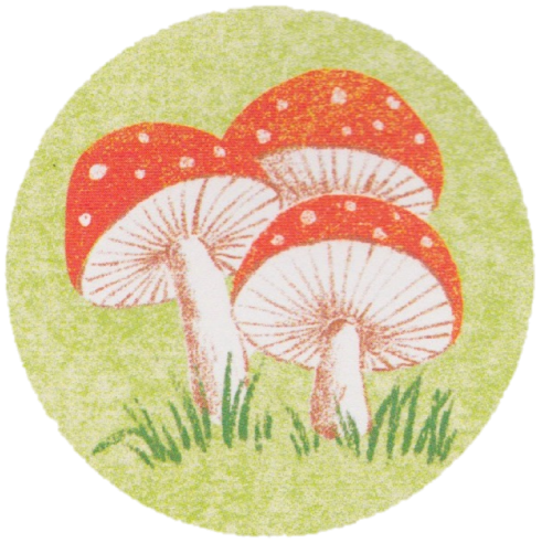 celebrate-picture-books-picture-book-review-round-mushrooms