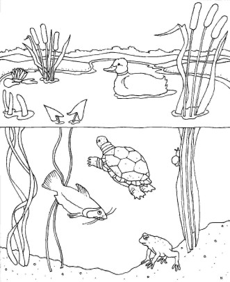 animal-celebrate-picture-books-picture-book-review-habitat-coloring-pages-for-kids-cooloring-com-coloring-pages-of-pond-animals