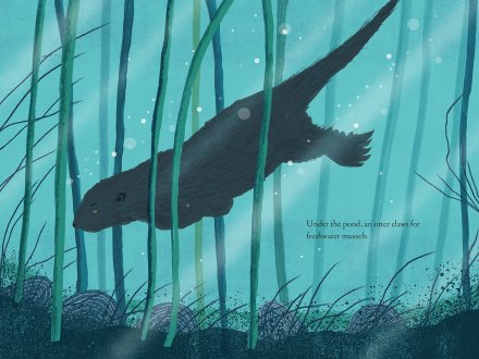 celebrate-picture-books-picture-book-review-over-and-under-the-pond-otter
