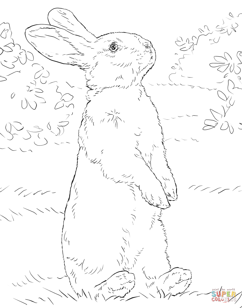 picture book hare colored - photo #13