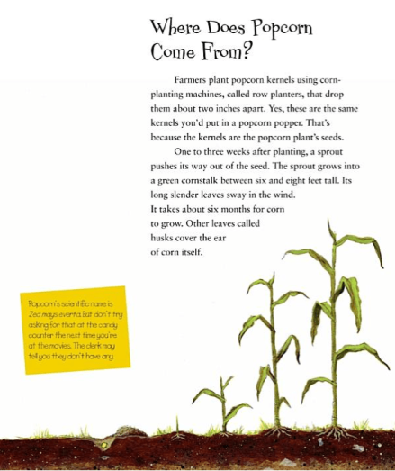 celebrate-picture-books-picture-book-review-popcorn!-elaine-landou-and-brian-lies-corn-stalks