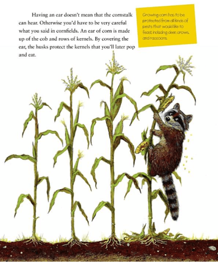 celebrate-picture-books-picture-book-review-popcorn!-elaine-landou-brian-lies-raccoon-in-field
