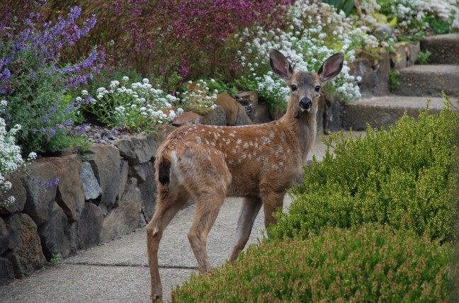 celebrate-pciture-books-picture-book-review-deer-for Marsha-Diane-Arnold-blog-tour-post-interview