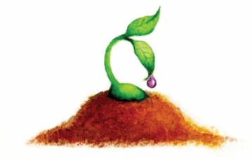 celebrate-picture-books-picture-book-review-seed-man-sprout
