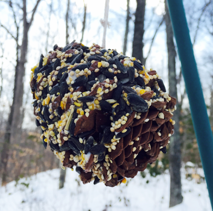 celebrate-picture-books-picture-book-review-pine-cone-bird-feeder