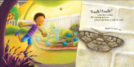 celebrate-picture-books-picture-book-review-an-extraordinary-ordinary-moth-hiding