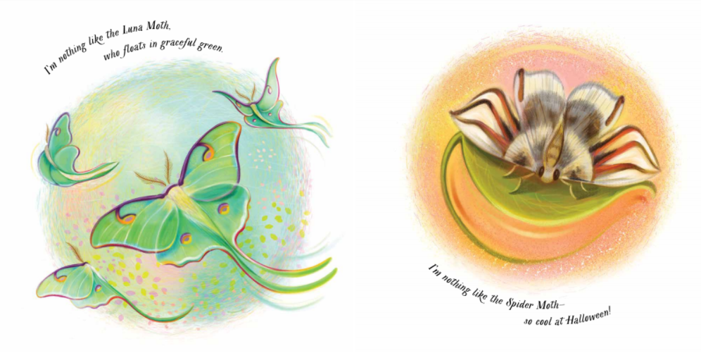 celebrate-picture-books-picture-book-review-an-extraordinary-ordinary-moth-luna