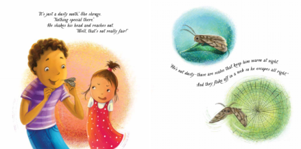 celebrate-picture-books-picture-book-review-an-extraordinary-ordinary-moth-web