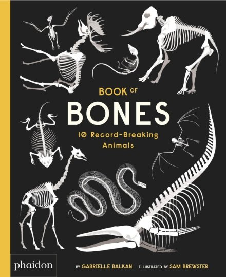 celebrate-picture-books-picture-book-review-book-of-bones-cover