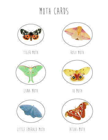 celebrate-picture-books-picture-book-review-moth-cards