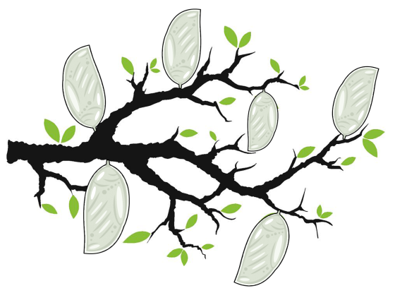 celebrate-picture-books-picture-book-review-tree-branch-with-white-cocoons