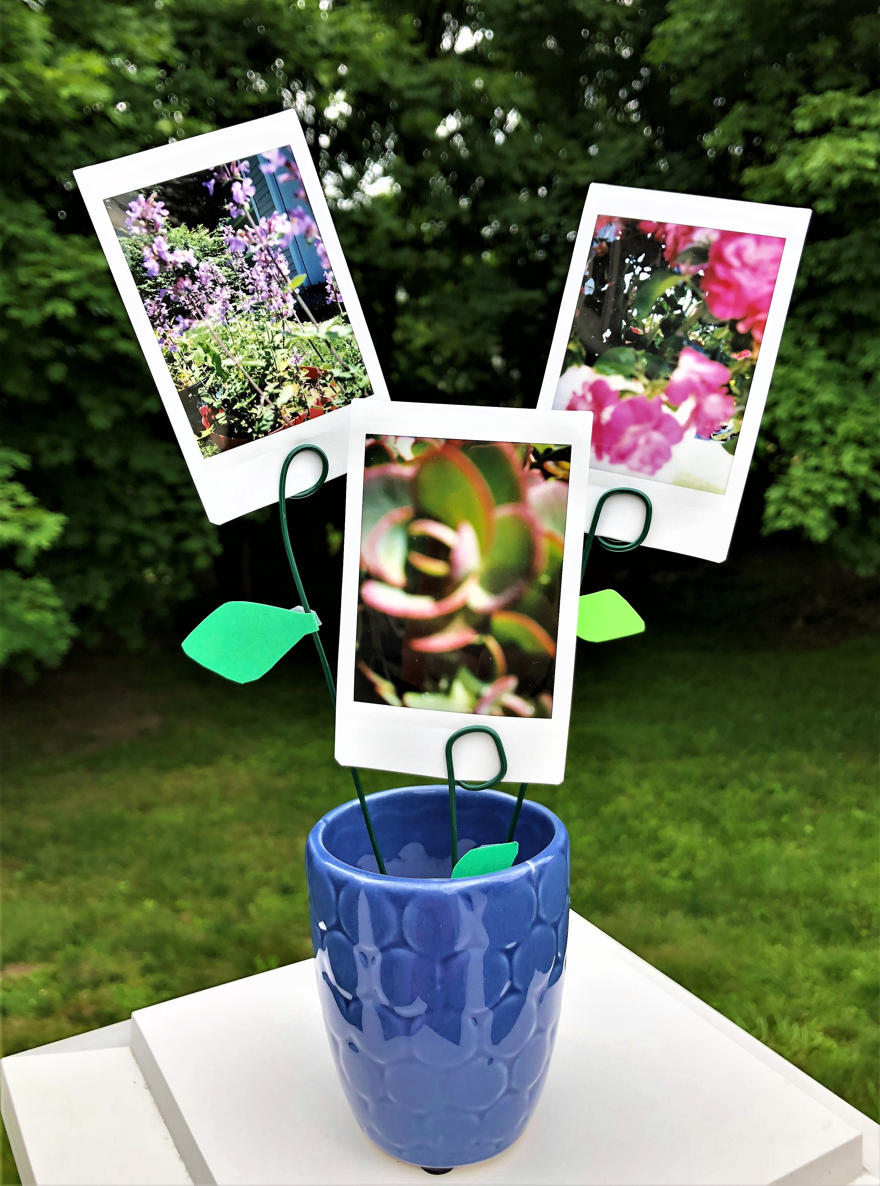 celebrate-picture-books-picture-book-review-pic-a-pot-of-flowers-craft