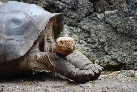 celebrate-picture-books-picture-book-review-galapagos-girl-galapagos-tortoise
