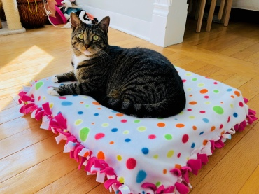 celebrate-picture-books-picture-book-review-cat-bed-craft