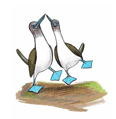celebrate-picture-books-picture-book-review-Galápagos-Girl-blue-footed-booby