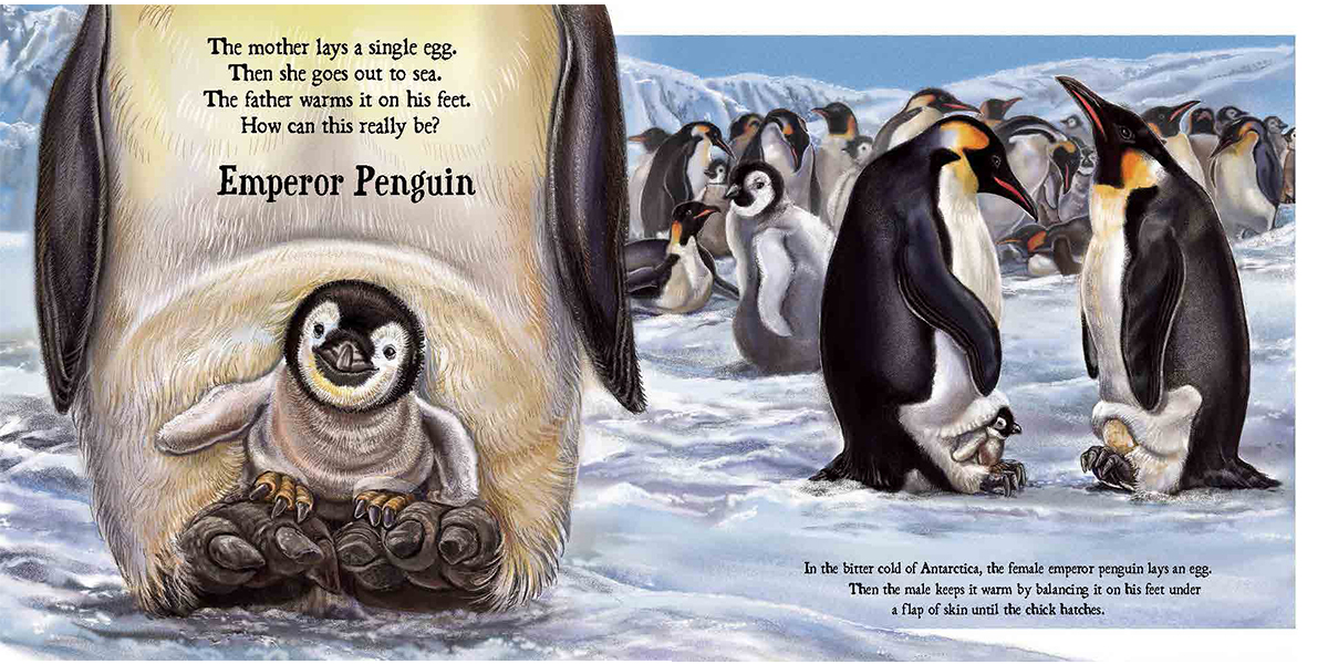 celebrate-picture-books-picture-book-review-baby-on-board-emperor-penguin
