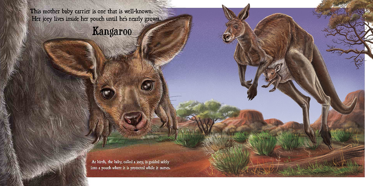 celebrate-picture-books-picture-book-review-baby-on-board-kangaroo