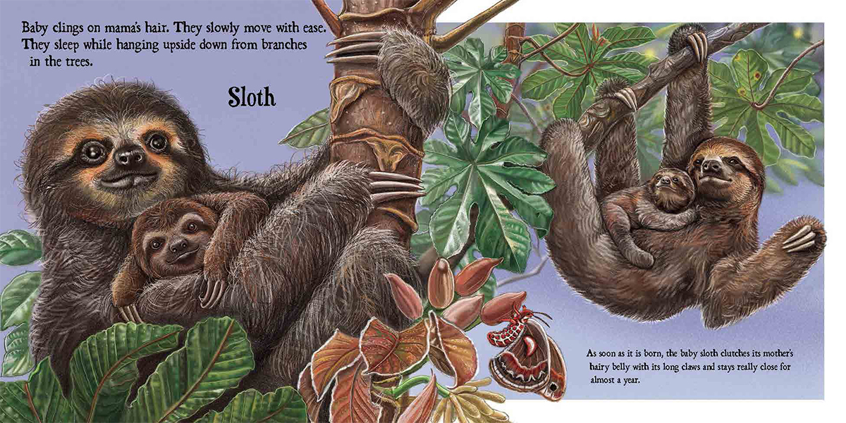 celebrate-picture-books-picture-book-review-baby-on-board-sloth