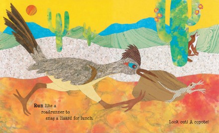 celebrate-picture-books-picture-book-review-paddle-perch-climb-roadrunner