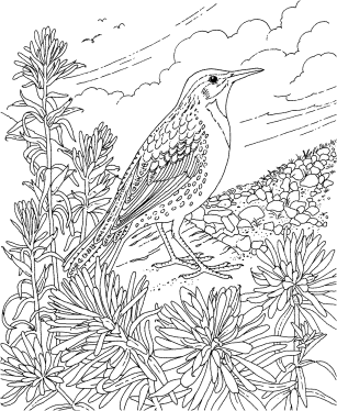 celebrate-picture-books-picture-book-review-kansas-western-meadowlark-coloring-page