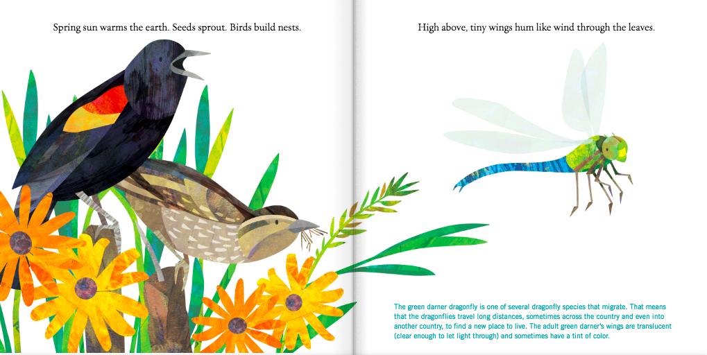 celebrate-picture-books-picture-book-review-birds