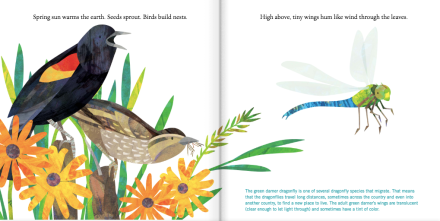 celebrate-picture-books-picture-book-review-birds
