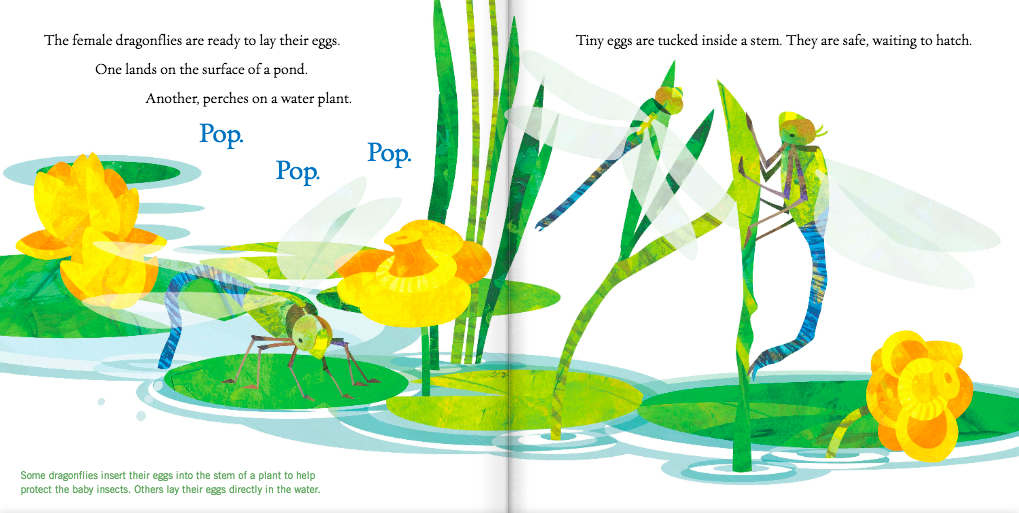 celebrate-picture-books-picture-book-review-soar-high-dragonfly-laying-eggs