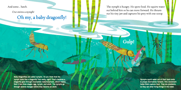 celebrate-picture-books-picture-book-review-soar-high-dragonfly-nymph