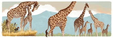 celebrate-picture-books-picture-book-review-juma-the-giraffe-herd