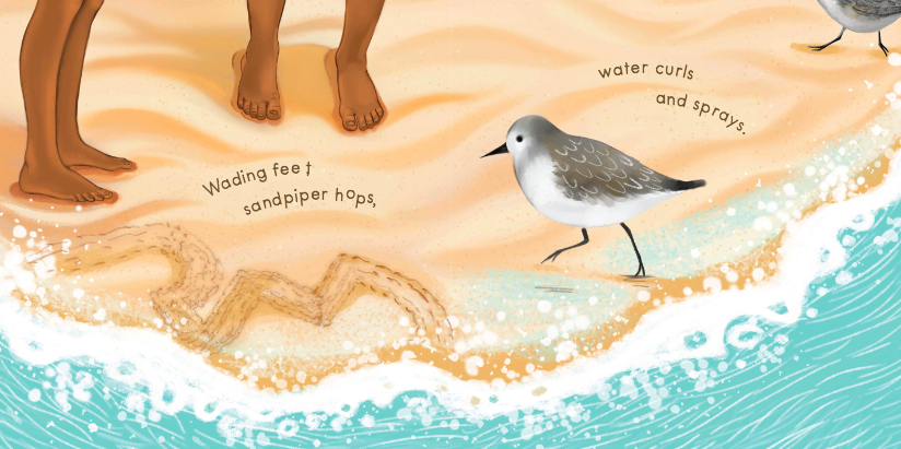 celebrate-picture-books-picture-book-review-sandy-feet-whose-feet-sand-piper