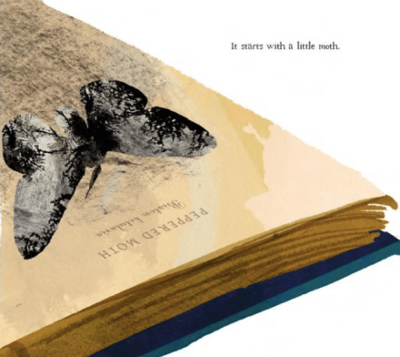 celebrate-picture-books-picture-book-review-moth-an-evolution-story-book
