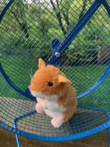 celebrate-picture-books-picture-book-review-tip-and-tucker-hide-and-squeak-hamster-toy-for-giveaway