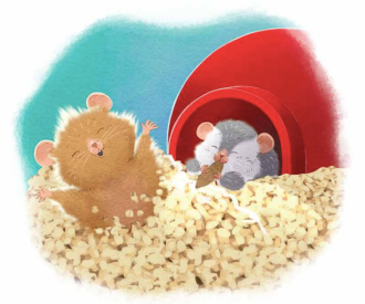 celebrate-picture-books-picture-book-review-tip-and-tucker-hide-and-squeak-home