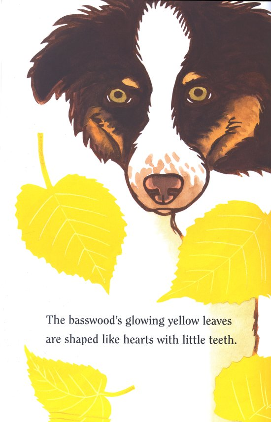 celebrate-picture-books-picture-book-review-leaf-jumpers-dog