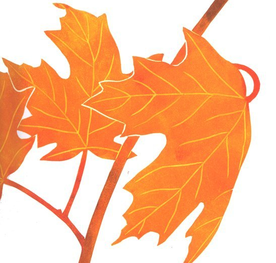 celebrate-picture-books-picture-book-review-leaf-jumpers-maple