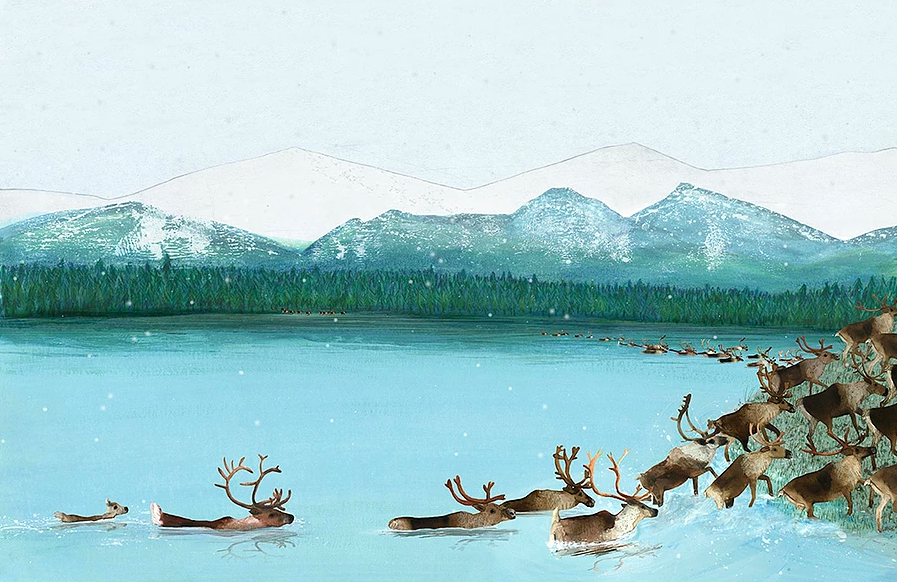 celebrate-picture-books-picture-book-review-migration-incredible-animal-journeys-caribou