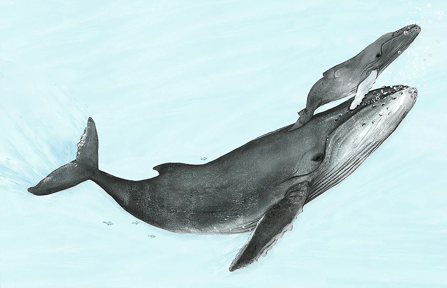 celebrate-picture-books-picture-book-review-migration-incredible-animal-journeys-whales